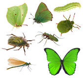 Green color insects collection isolated on white — Stock Photo