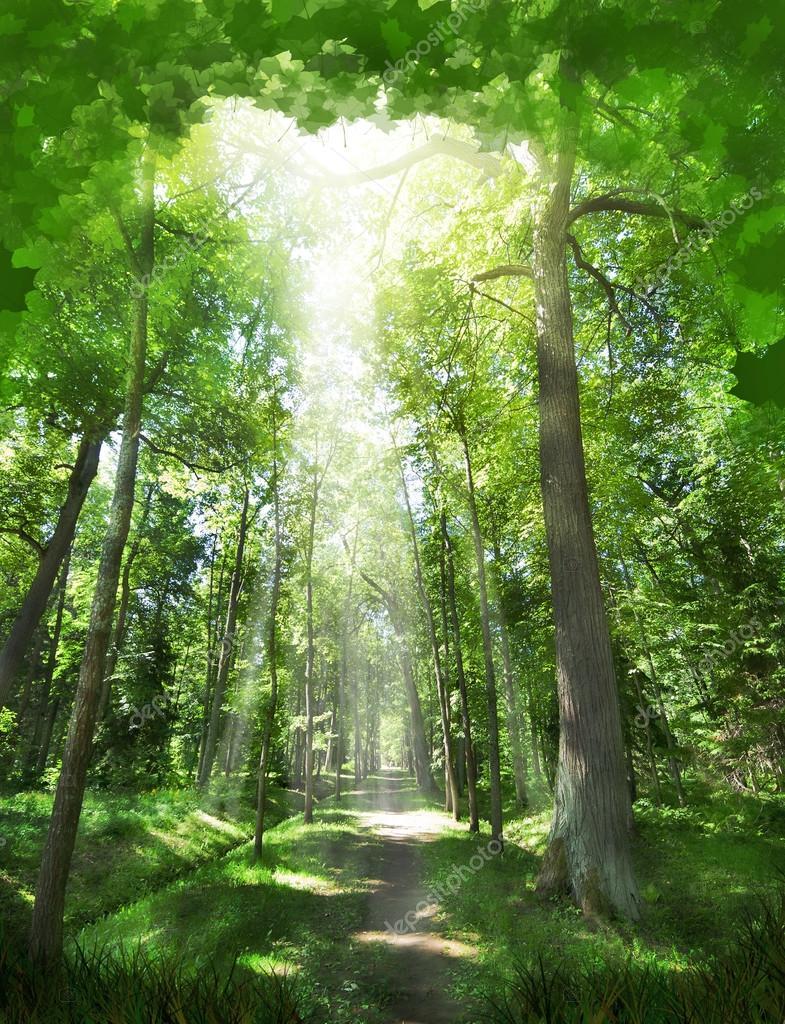 Фотообои Лесной пейзаж в зеленый листва рамка