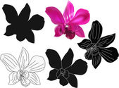 Dark pink orchid single flower and its sketches isolated on whit — Stock Vector