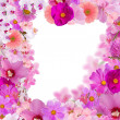 Decoration from pink flower frame isolated on white — Stock Photo