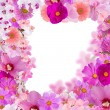 Decoration from pink flower frame isolated on white — Stock Photo #34880249