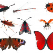 Red color insect collection isolated on white — Stock Photo