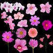 Set of fourteen pink color flowers on black — Stock Photo #34882195