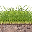 Green grass in soil — Stock Photo #34888697