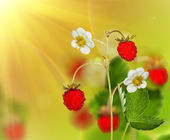 Red strawberries under bright light — Stok fotoğraf
