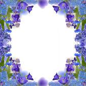 Blue flowers frame isolated on white — Stock Photo