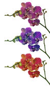 Set of three color orchid branches — Stock Photo