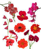 Set of nine red color flowers isolated on white — Stock fotografie