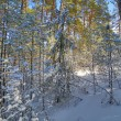 Snow-covered trees in forest — Stock Photo