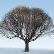 Large bare winter tree — Stock Photo