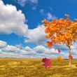 Bright autumn maple on field — Stock Photo