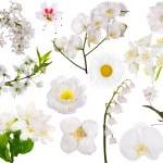 Set of isolated white flowers — Stock Photo #34897711