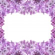 Lush lilac flower frame on white — Stock Photo