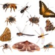 Set of brown color insects isolated on white — Stock Photo #34898379