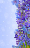 Strip from blue flowers — Stock Photo