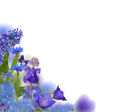 Blue flowers corner isolated on white — Stock Photo
