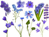 Set of eleven blue flowers on white — Stock Photo