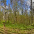 Footpath in spring green birch forest — Stock Photo