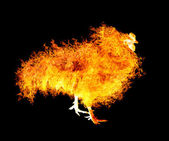 Flame rooster — Stock fotografie