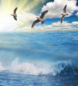 Gulls flying above sunny blue sea — Stock Photo