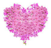Heart shape composition from pink orchid flowers — Stock Photo