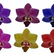 Six colors orchid flowers collection — Stock Photo #34914967