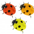 Three colors seven ponts ladybirds — Stock Photo