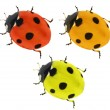 Three colors seven ponts ladybirds — Stock Photo #34919887