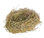 Single nest from grass isolated on white — Stockfoto