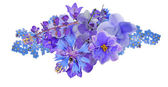 Bunch of blue flowers isolated on white — Stock Photo