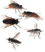Set of five flies on white — Stock Photo