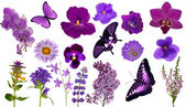 Set of lilac color butterflies and flowers — Stockfoto