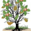 Oak tree with leaves and acorns — Stock Vector