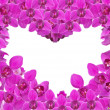 Pink orchid flowers heart shape frame on white — Stock Photo