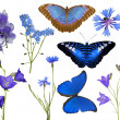 Set of blue flowers and butterflies isolated on white — Stock Photo #34924533