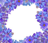 Frame fronm blue flowers isolated on white — Stock Photo