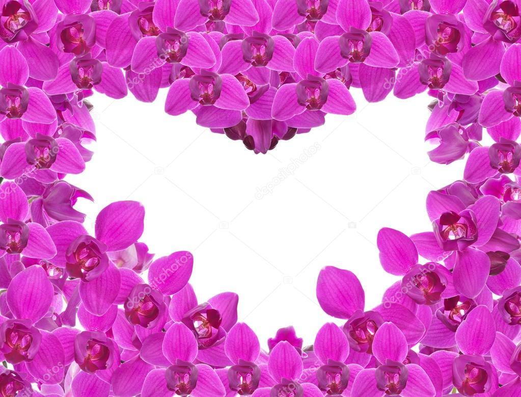 White And Pink Orchid Flowers Pink Orchid Flowers Heart