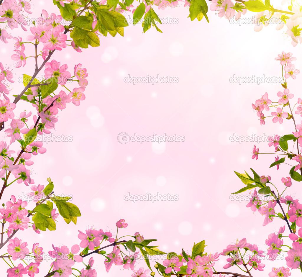 樱桃树花帧品格背景上– 图库图片