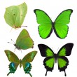 Set of five green butterflies isolated on white — Stock Photo