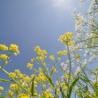 Summer yellow and white wildflowers on blue sky — Stock Photo