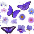 Set of violet color butterflies and flowers isolated on white — Stock Photo #36748217