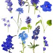 Set of thirteen blue flowers isolated on white — Stock Photo