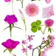 Set of twelve pink color flowers on white — Stock Photo #36748237