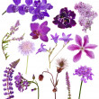 Set of lilac color flowers on white — Stock Photo #36748253