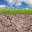 Stock Photo: Green grass spripe in soil under blue sky