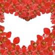 Red orchid flowers heart shape frame on white — Stock Photo