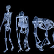 Set of three skeletons isolated on black — Stock Photo #36748941