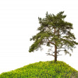 Old large pine on green hill — Stock Photo #36749027