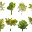 Set of eight green trees isolated on white — Stock Photo #36749139