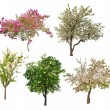 Set of five blooming trees isolated on white — Stock Photo